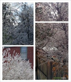 Icy Trees and Shrubs - Toronto Ice Storm 2013 | EmmaEats